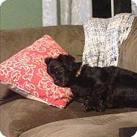 Adopt A Pet :: Diva (COURTESY POST) - Baltimore, MD