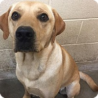 Adopt A Pet :: Abel - Springdale, AR