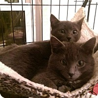 Adopt A Pet :: Mistletoe - Mount Laurel, NJ
