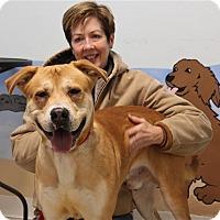 Adopt A Pet :: Teddy - Elyria, OH