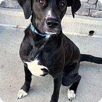 Adopt A Pet :: Duncan - Youngsville, NC