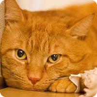 Adopt A Pet :: Theodore - Grayslake, IL
