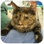 Photo 3 - Domestic Shorthair Cat for adoption in Sacramento, California - Lily