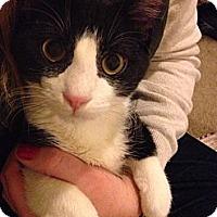 Adopt A Pet :: Roosevelt - St. Louis, MO