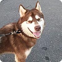 Adopt A Pet :: Harry - Augusta County, VA