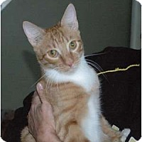 Adopt A Pet :: Ferrin Fireheart - Chula Vista, CA