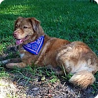 Adopt A Pet :: Cooper - Sarasota, FL