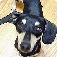 Adopt A Pet :: Heinz - San Jose, CA