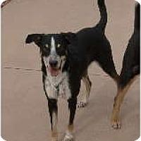 Adopt A Pet :: Reese - Only $85 adoption fee! - Litchfield Park, AZ