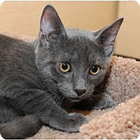 Adopt A Pet :: George - Farmingdale, NY