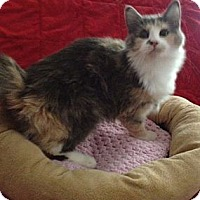 Adopt A Pet :: Tiffany - Simpsonville, SC