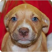 Adopt A Pet :: Zoey - Reisterstown, MD