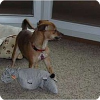 Adopt A Pet :: Mindy - Nine Mile Falls, WA