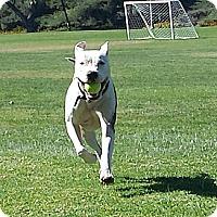 Adopt A Pet :: Jax - La Habra, CA