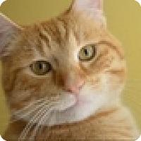 Adopt A Pet :: Belmont - Vancouver, BC