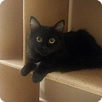Adopt A Pet :: Gonzalez 2 - West Dundee, IL