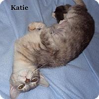 Adopt A Pet :: Katie - Bentonville, AR