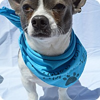 Adopt A Pet :: Sparky - Aurora, CO