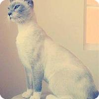 Adopt A Pet :: Lily - La Jolla, CA