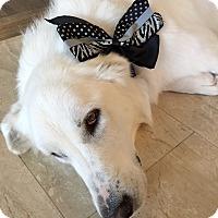 Adopt A Pet :: Cotton   Adopted - Tulsa, OK