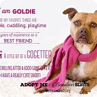 Pit Bull Terrier Mix Dog for adoption in Wichita, Kansas - Goldie
