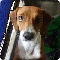Adopt A Pet :: Penny - Freeport, ME