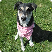 Adopt A Pet :: LIZA - New Cumberland, WV