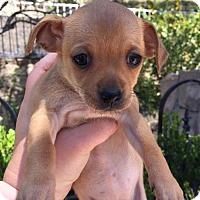 Adopt A Pet :: REY - Rancho Cucamonga, CA