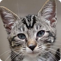 Adopt A Pet :: Jacota - Redwood City, CA