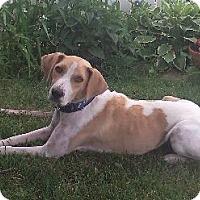 Adopt A Pet :: Raindrop - Hillside, IL