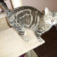 Adopt A Pet :: **Brooke - Montello, WI