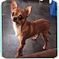 Adopt A Pet :: Lemur (POM DC) - Washington, DC