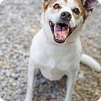 Adopt A Pet :: Muffy (Reduced Fee) - Cincinatti, OH