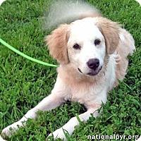 Adopt A Pet :: Fender / pup - pending - Beacon, NY