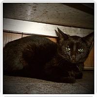 Adopt A Pet :: BIXLEY - Medford, WI