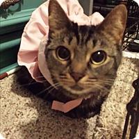 Adopt A Pet :: Annabelle - Garden City, MI