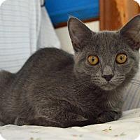 Adopt A Pet :: Smokey - Middletown, NY