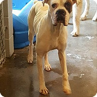 Adopt A Pet :: Fallon - Hainesville, IL
