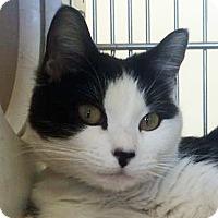 Adopt A Pet :: Tilly - Prescott, AZ