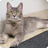 Adopt A Pet :: Annabelle - Manitowoc, WI