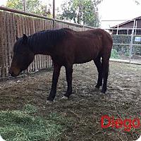Adopt A Pet :: Diego - El Dorado Hills, CA