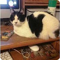 Adopt A Pet :: Joe - Whittier, CA