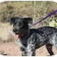 Adopt A Pet :: Vicky (HOLD) - Phoenix, AZ