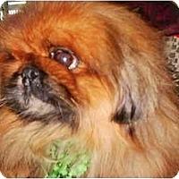Adopt A Pet :: Toby-NY - Mays Landing, NJ