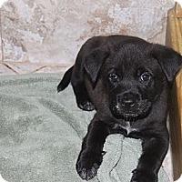 Adopt A Pet :: DODGER - Loxahatchee, FL