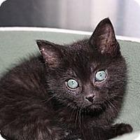 Adopt A Pet :: Lizzie - Armuchee, GA
