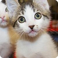 Adopt A Pet :: Gibbs - Irvine, CA