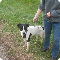 Adopt A Pet :: #517-14 @ Animal Shelter - Zanesville, OH