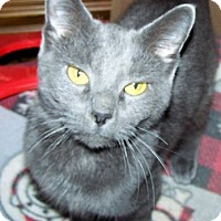 Adopt A Pet :: January Janie - Fort Wayne, IN