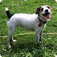 Adopt A Pet :: Missy in Longview - Dallas/Ft. Worth, TX